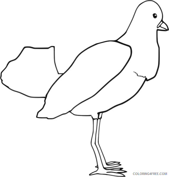 Bird Outline Coloring Pages bird outline animal Printable Coloring4free