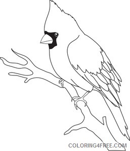 Bird Outline Coloring Pages cardinal image black and Printable Coloring4free
