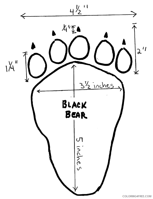 Black Bear Coloring Pages terms black Printable Coloring4free