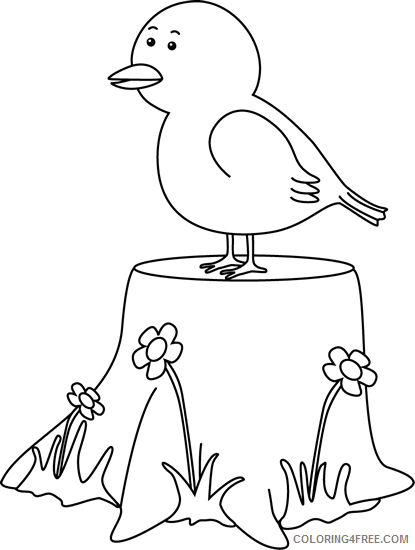 Black and White Bird Coloring Pages bird on Printable Coloring4free