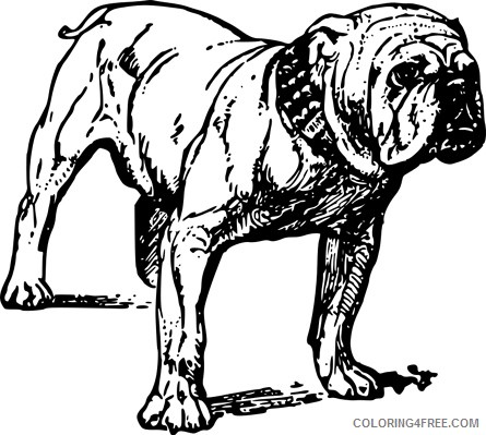 Black and White Bulldog Coloring Pages bulldog 2 jpg Printable Coloring4free