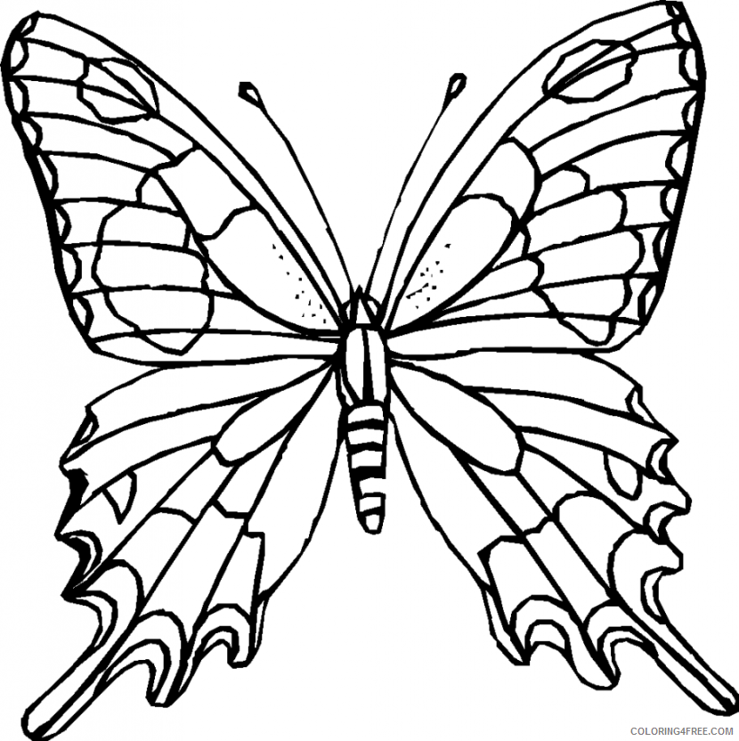 Black and White Butterfly Coloring Pages butterfly 116 png Printable Coloring4free