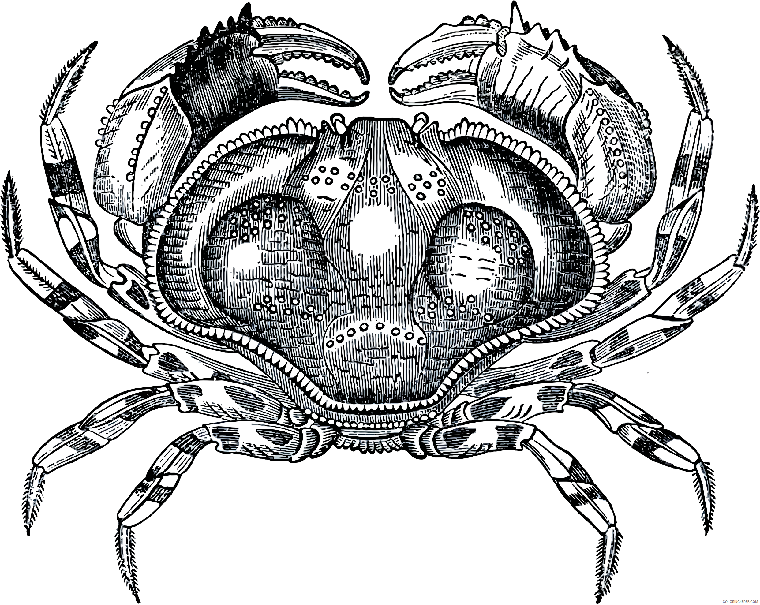 Black and White Crab Coloring Pages grayscale crab bpng Printable Coloring4free