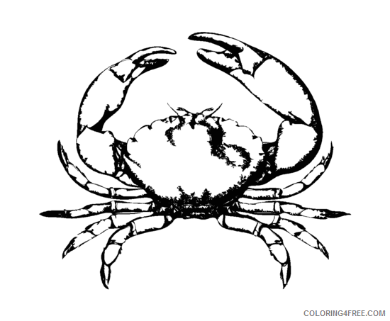 Black and White Crab Coloring Pages stone crab png Printable Coloring4free