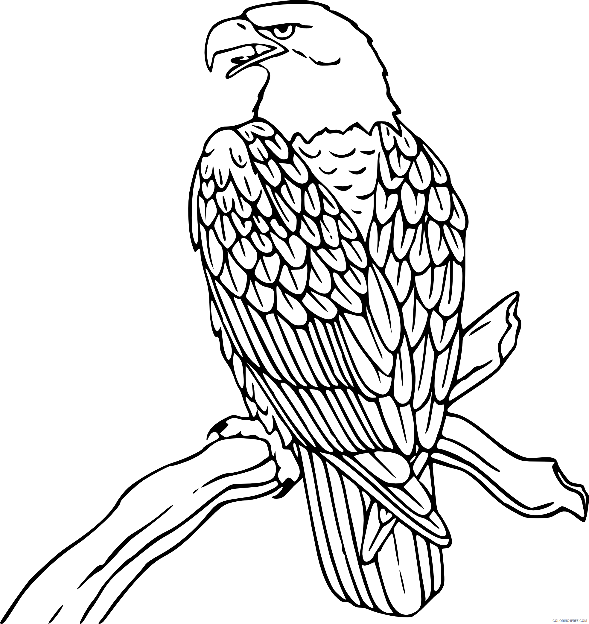 Black and White Eagle Coloring Pages eagle Printable Coloring4free