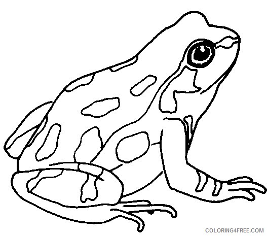 Black and White Frog Coloring Pages frog for Printable Coloring4free