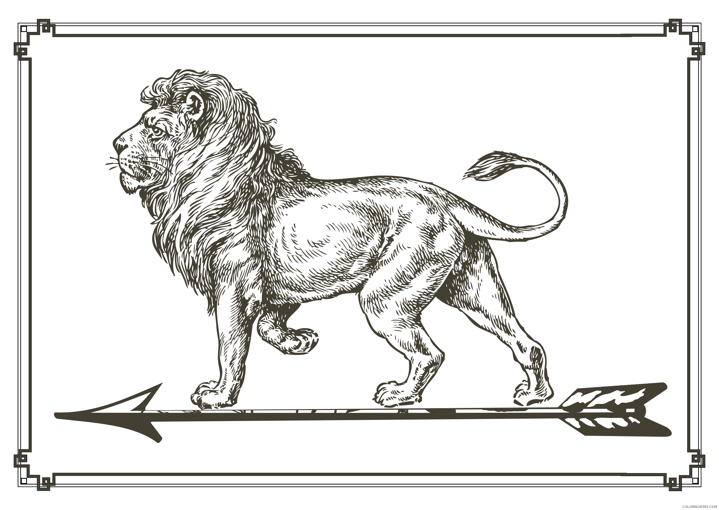 Black and White Lion Coloring Pages lion on arrow Printable Coloring4free