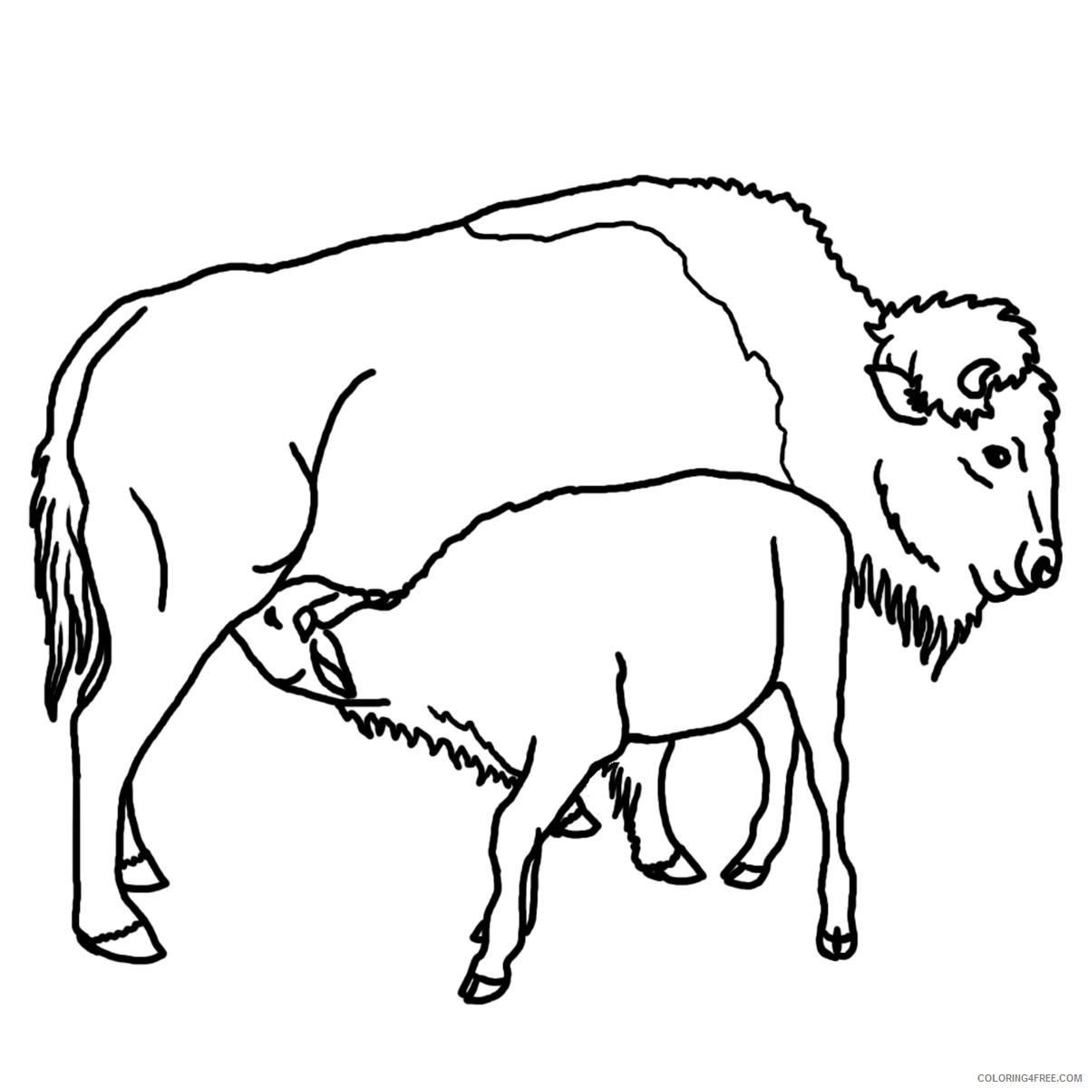 Buffalo Coloring Pages buffalo w calf Printable Coloring4free