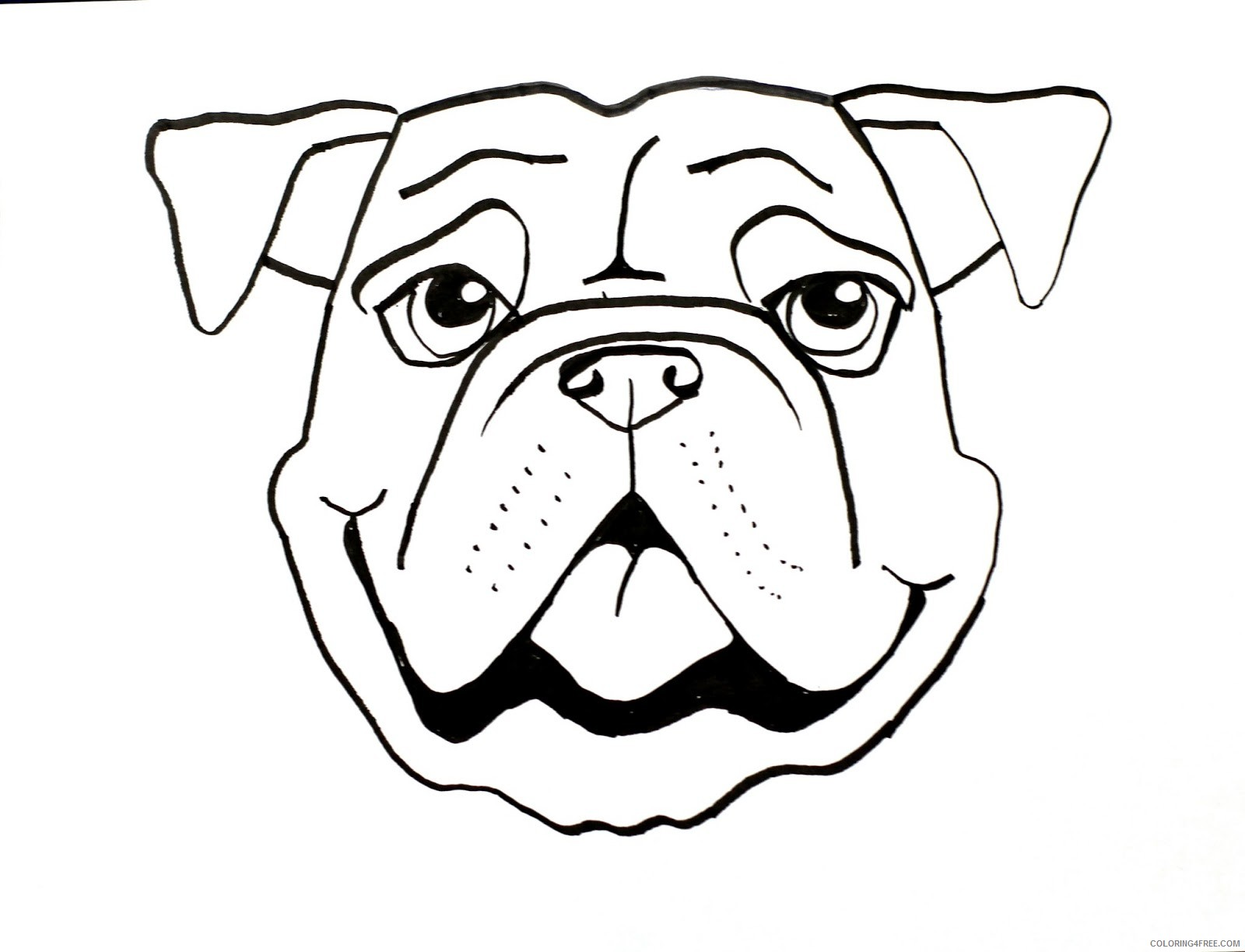 Bulldog Coloring Pages smart class bull dog draw Printable Coloring4free