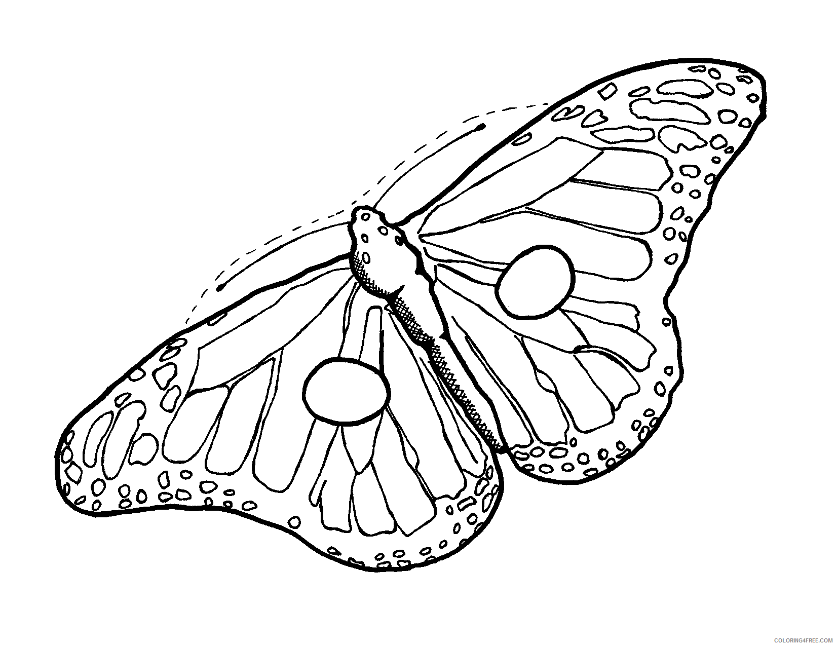 Butterfly Huge Coloring Pages 31 butterfly drawing template free Printable Coloring4free