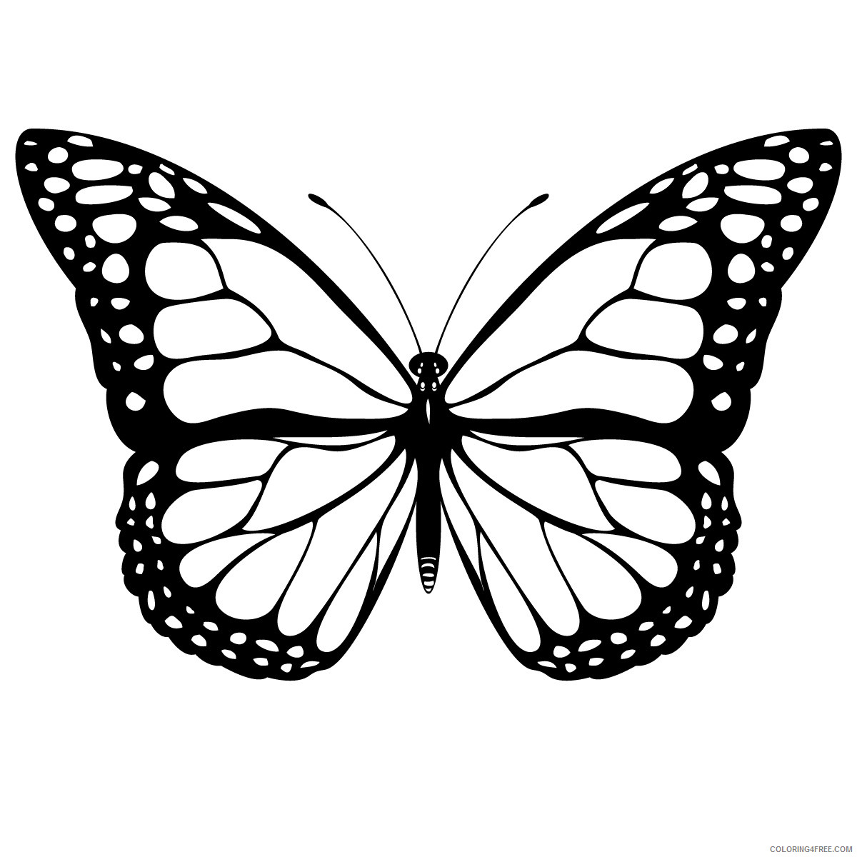 Butterfly Huge Coloring Pages this drawing of a butterfly Printable Coloring4free