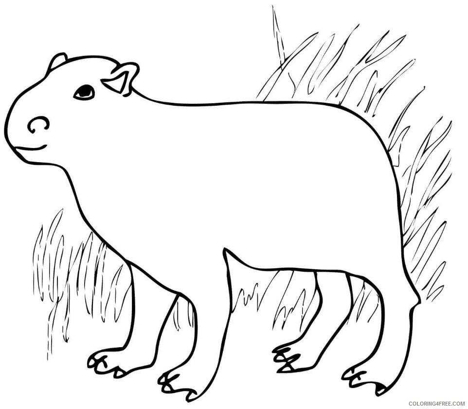 Capybara Coloring Pages capybara jpg Printable Coloring4free