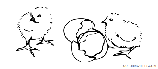 Chicks Coloring Pages Chicks Hatching png Printable Coloring4free