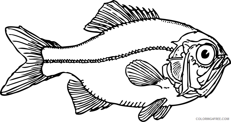 Cod Fish Coloring Pages fish cod head and shoulders Printable Coloring4free