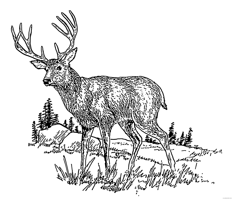 Deer Coloring Pages Description Deer 2 Psf Png Printable Coloring4free Coloring4free Com