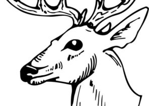 Deer Coloring Pages Page 2 Of 4 Coloring4free Com