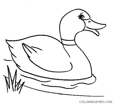Duck Outline Coloring Pages 35 duck line drawing free Printable Coloring4free