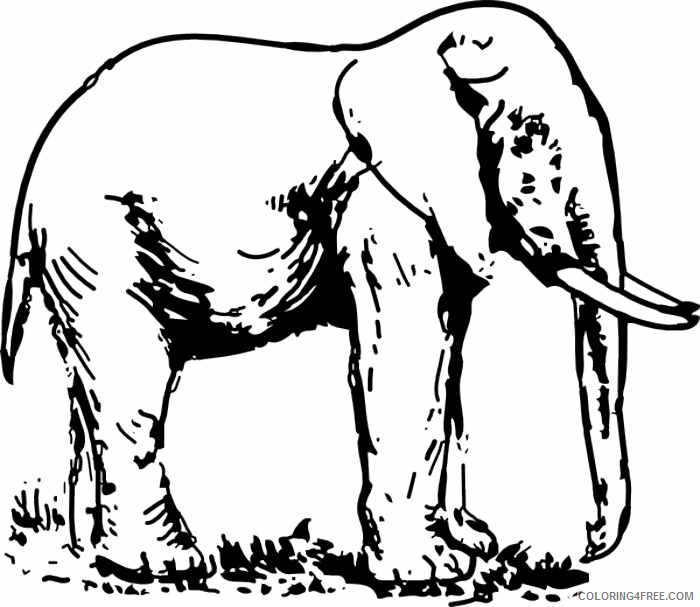 Elephant High Quality Coloring Pages elephant 102 jpg Printable Coloring4free