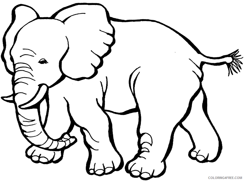 Elephant Outline Coloring Pages elephant 4 png Printable Coloring4free