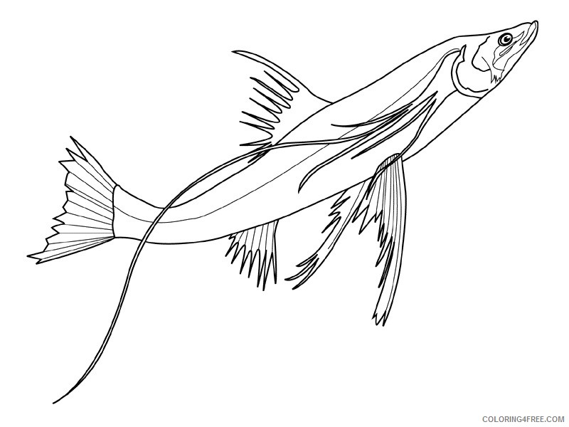 Fish Coloring Pages fish animals 3 Printable Coloring4free