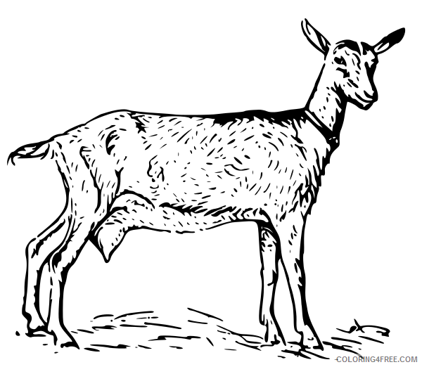 Goat Outline Coloring Pages search terms Printable Coloring4free