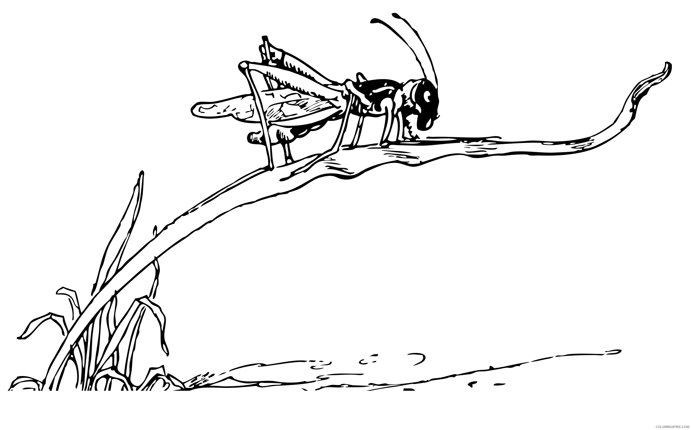 Grasshopper Coloring Pages grasshopper on blade of grass Printable Coloring4free