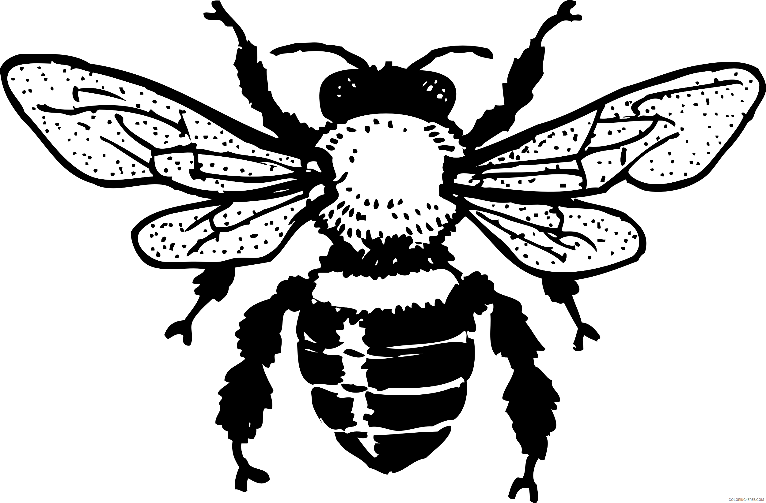 Honey Bee Coloring Pages honey bee b001 png Printable Coloring4free