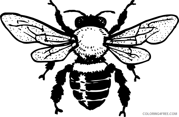 Honey Bee Coloring Pages Queen Honey Bee Hi Png Printable Coloring4free -  Coloring4Free.com