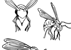 Adult Coloring Book,page A Cute Hornet Image For Relaxing.Zen Art ... | 210x296