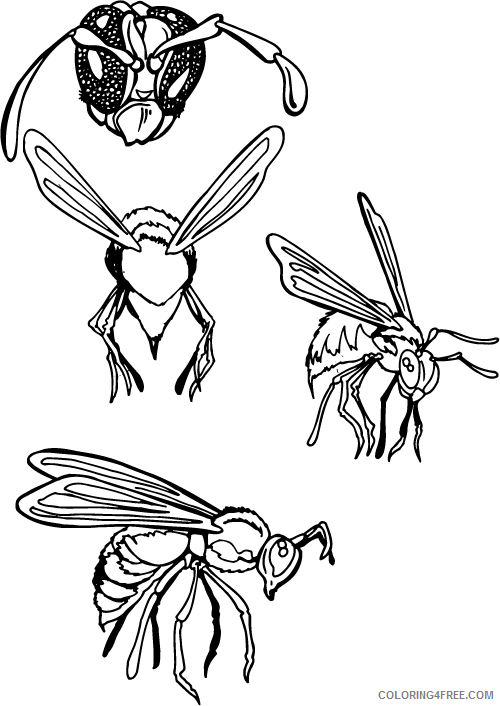 Hornet Coloring Pages hornet mascot Printable Coloring4free