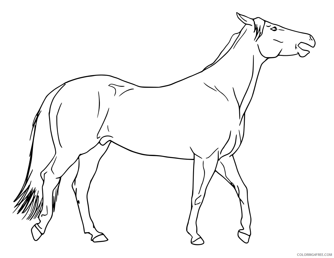 Horse Coloring Pages free horses coloring Printable Coloring4free