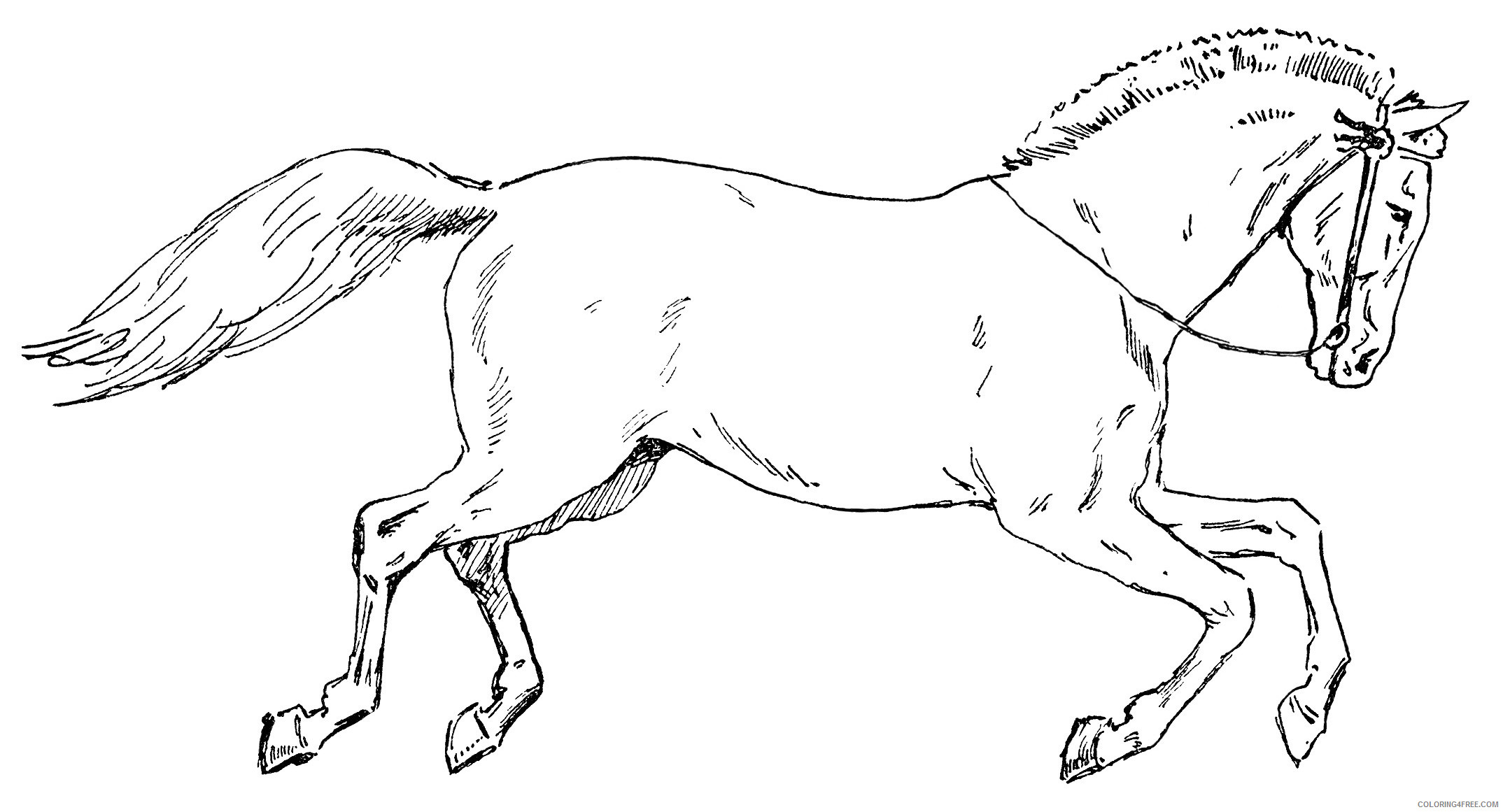 Horse Outline Coloring Pages Circus horse black and Printable Coloring4free