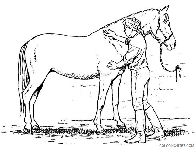 Horse Quality Coloring Pages showmanship horse care Printable Coloring4free
