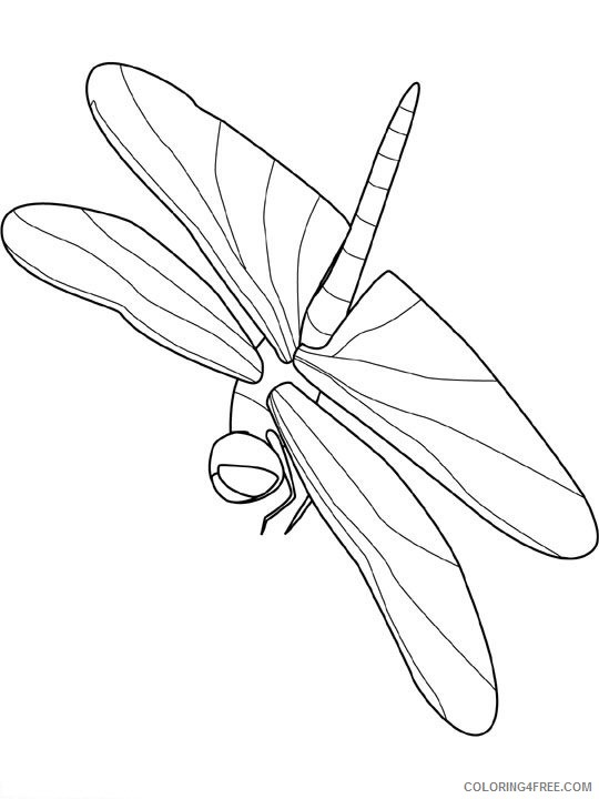 Insect Coloring Pages insect animal 17 Printable Coloring4free