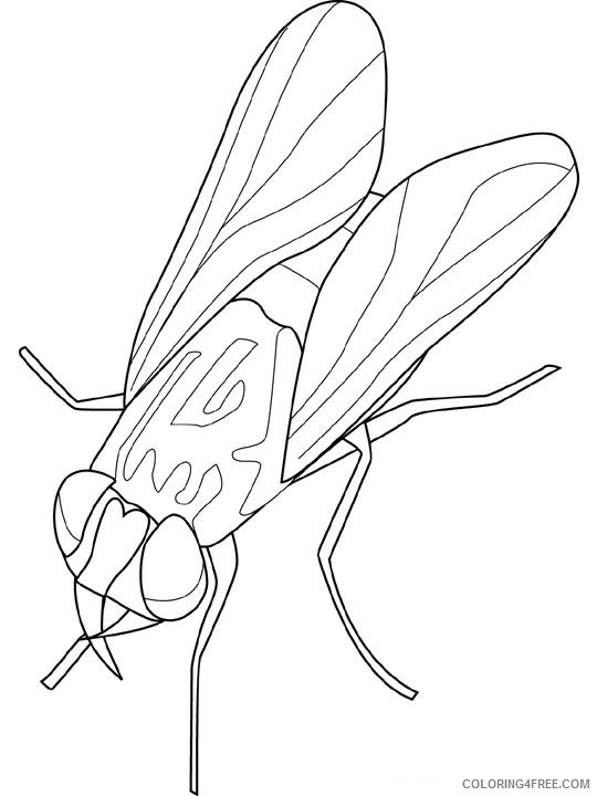 Insect Coloring Pages insect animal 18 Printable Coloring4free