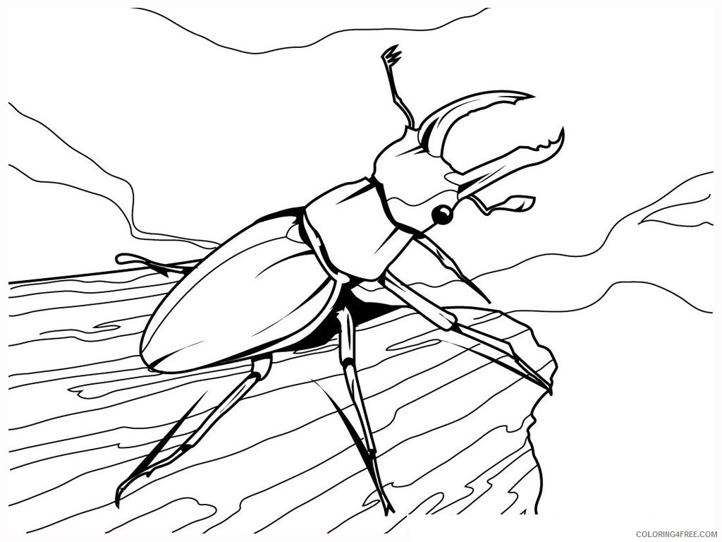 Lightning Bug Coloring Pages lightning bug clipart Printable Coloring4free