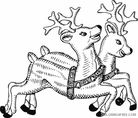 More Black and White Animals Coloring Pages free christmas animal public Printable Coloring4free