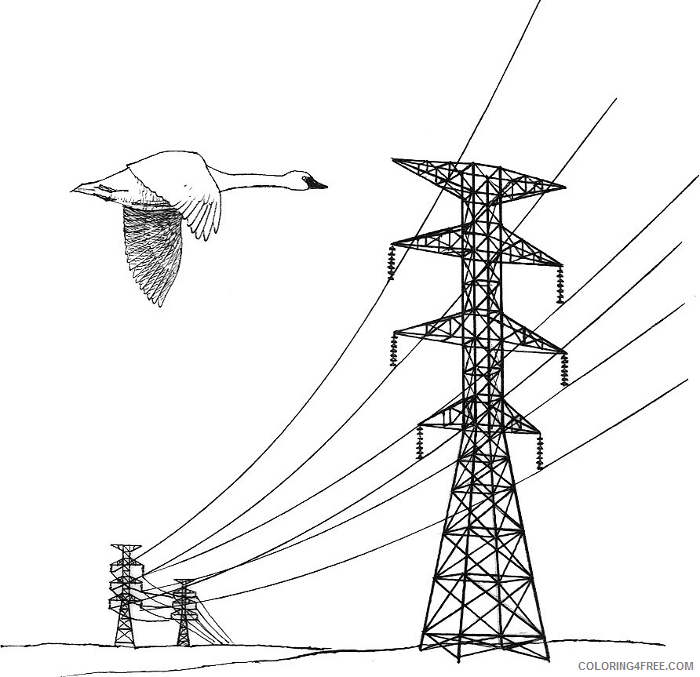 Nice Bird Coloring Pages power line power lines Printable Coloring4free