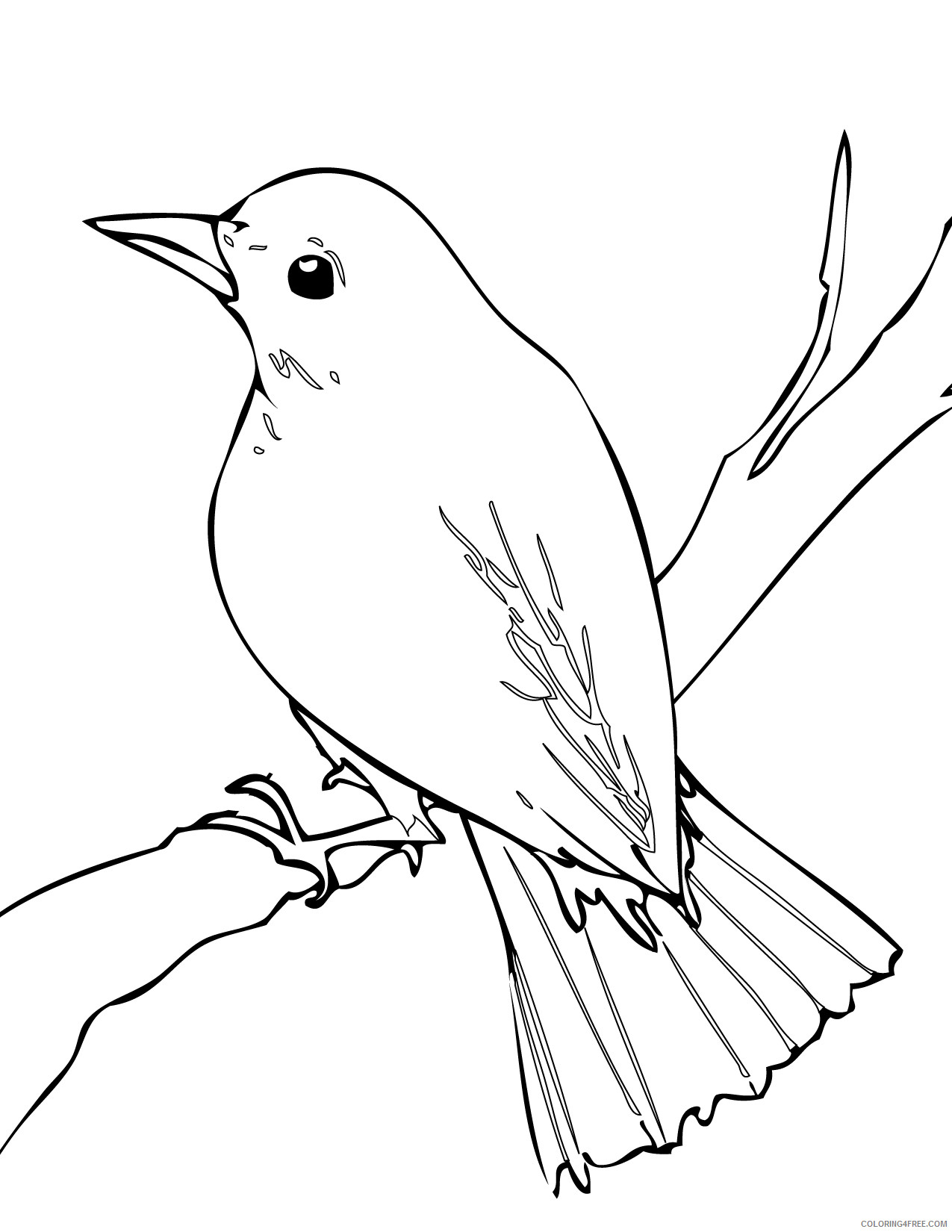 Nightingale Coloring Pages nightingale 62 jpg Printable Coloring4free