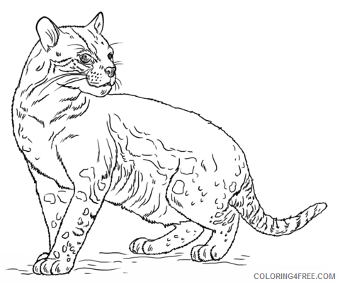 Ocelot Coloring Pages ocelot 34 png Printable Coloring4free
