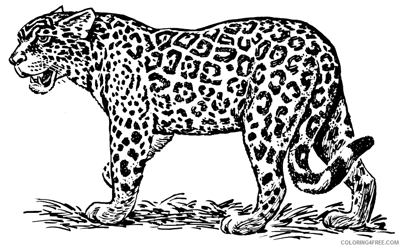 Ocelot Coloring Pages ocelot 66 png Printable Coloring4free