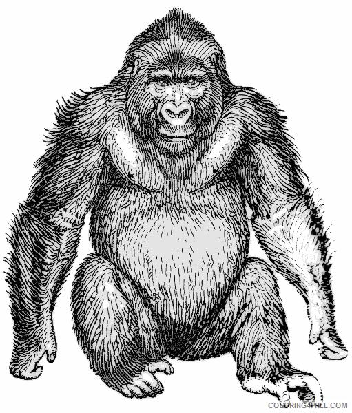 Orangutan Coloring Pages orangutan 89 png Printable Coloring4free