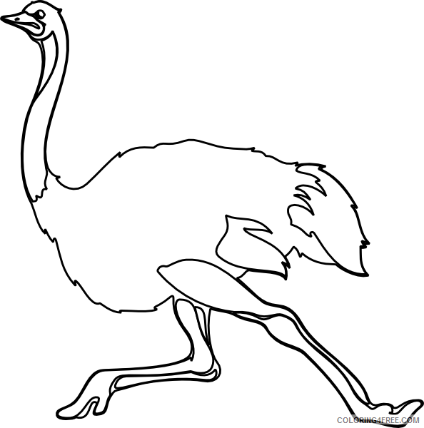 Ostrich Coloring Pages ostrich outline at Printable Coloring4free
