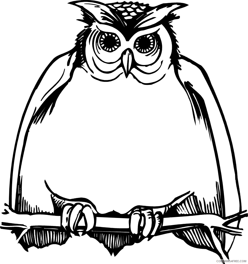 Owl on a Branch Coloring Pages illustration of a fat owl Printable Coloring4free