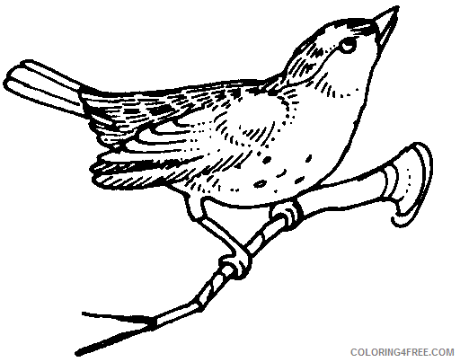 Quality Bird Coloring Pages wpcom animals birds miscellaneous Printable Coloring4free