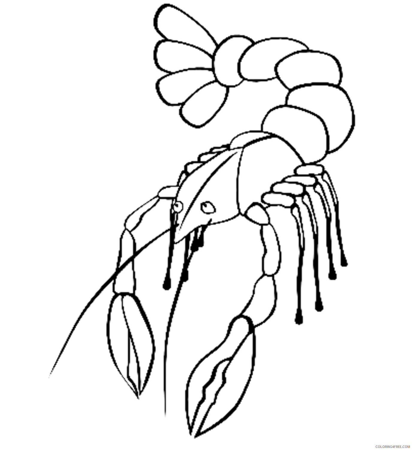 Quality Black and White Animals Coloring Pages animals designs crawfish boil koozie Printable Coloring4free