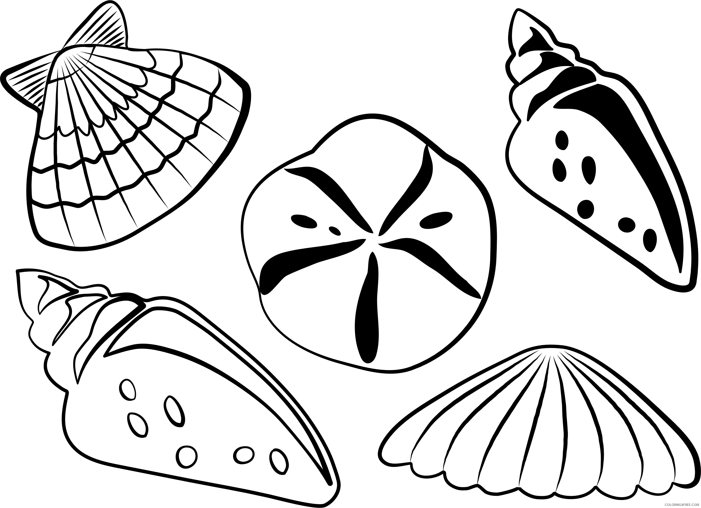 Shell Clip Art - Sea Shell Coloring Pages - Free Transparent PNG ... | 1709x2358