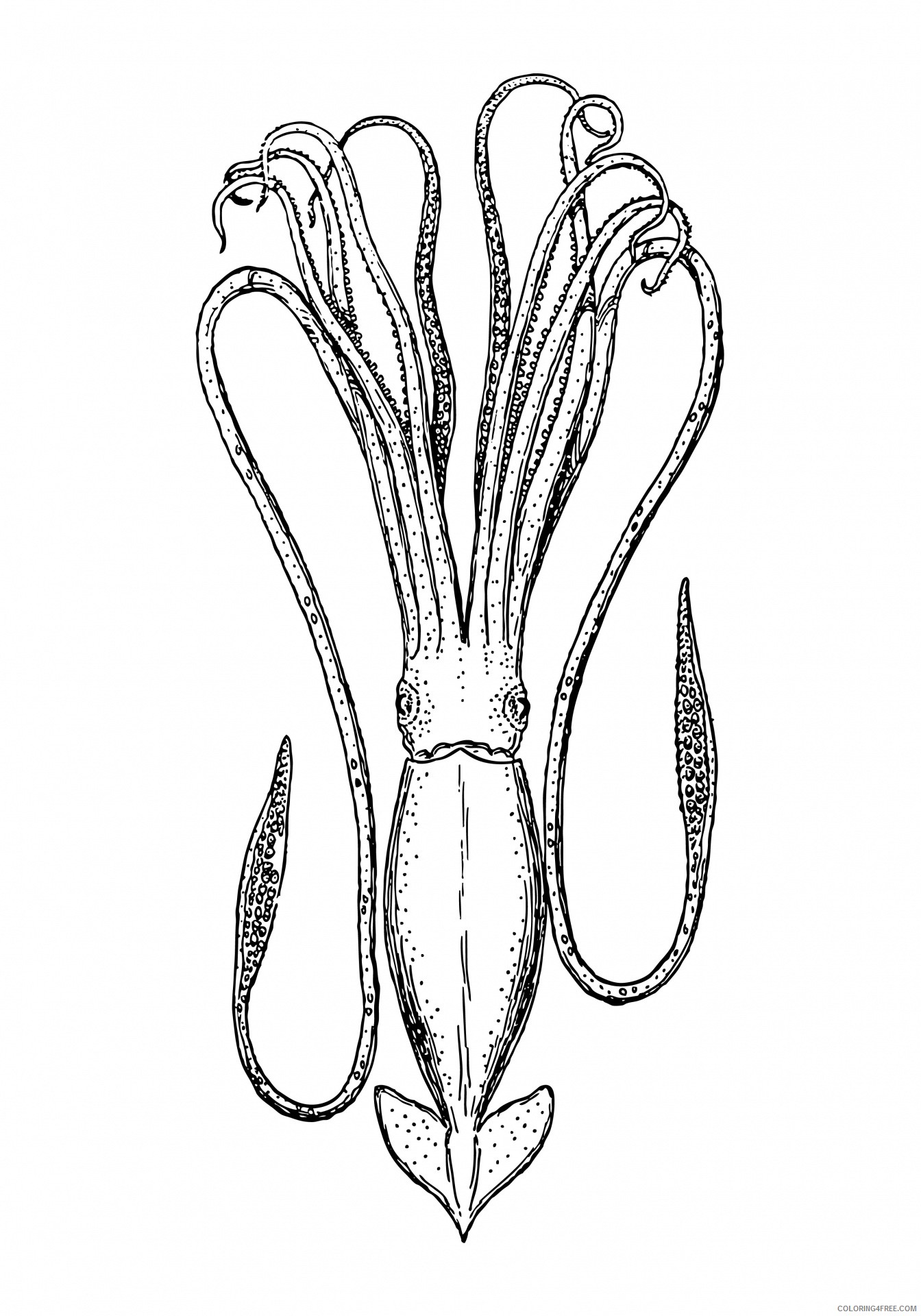 Squid Coloring Pages Squid 16 Jpg Printable Coloring4free Coloring4free Com