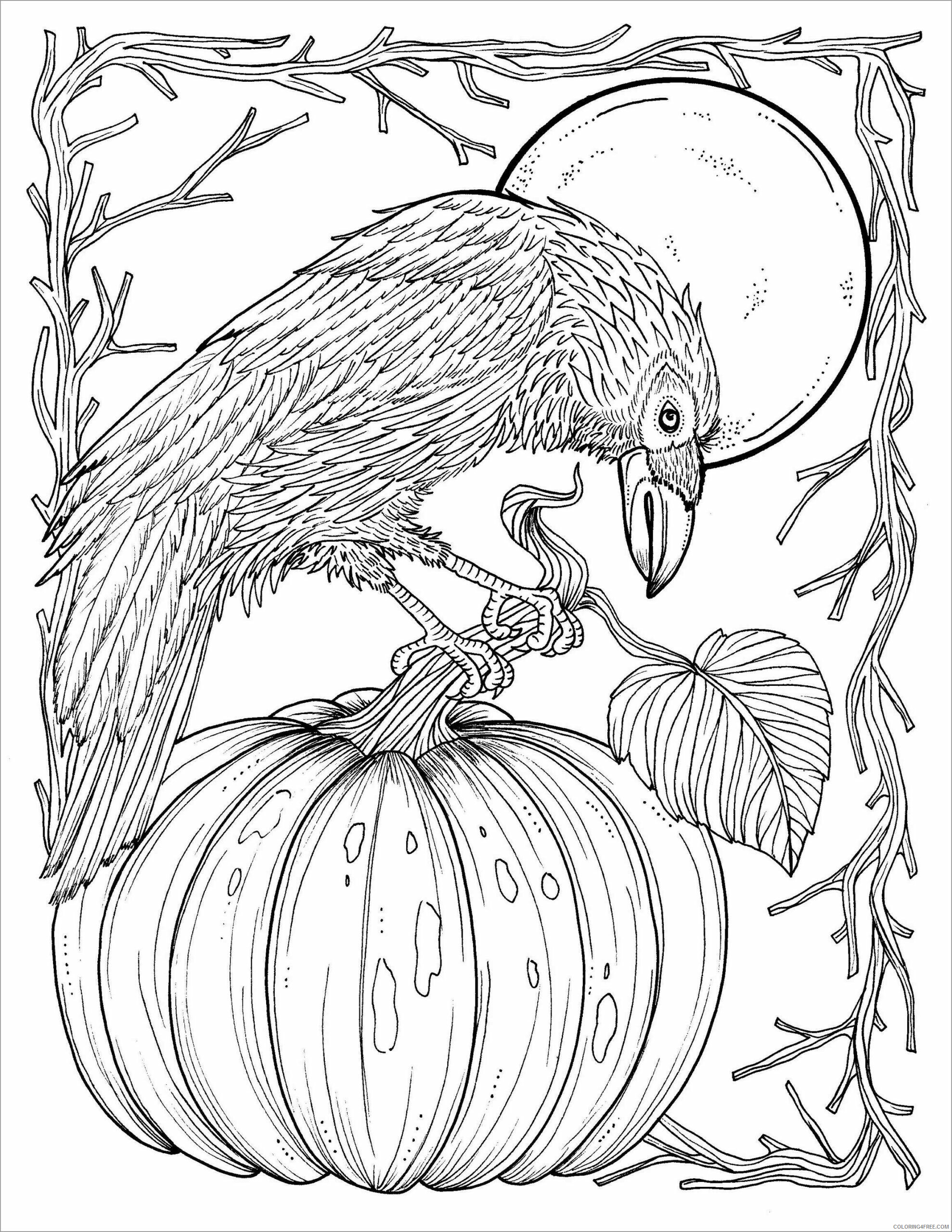 Adult Animals Coloring Pages crow for adult Printable 2020 141 Coloring4free