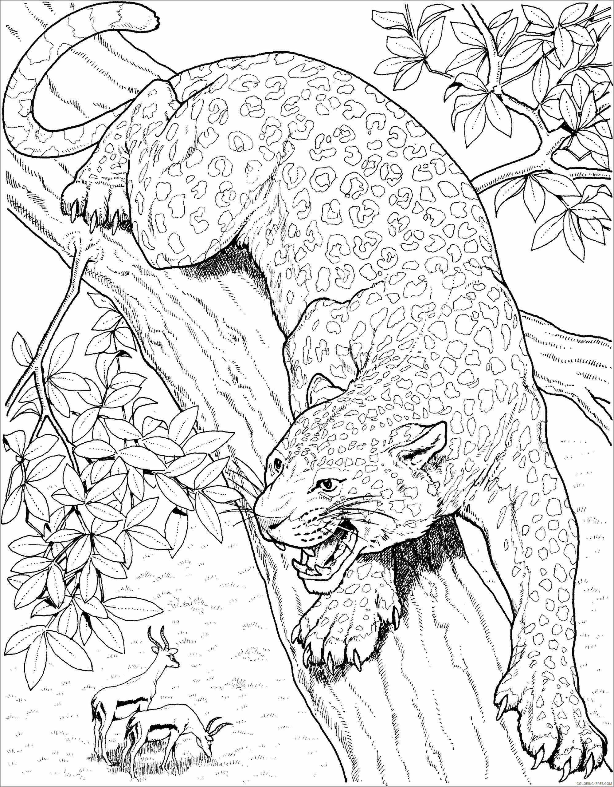 Adult Animals Coloring Pages leopard for adults Printable 2020 159 Coloring4free